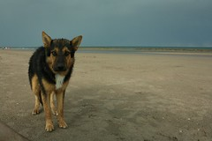 El perro playero (natalia.konig) Tags: sea sky storm praia beach rain arcoiris mar lluvia rainbow playa cielo nubes tormenta cluds