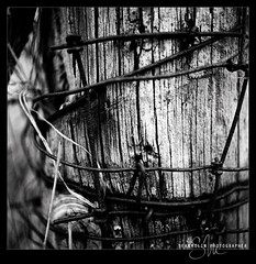 Rusted Ivy (Sean Molin Photography) Tags: wood blackandwhite bw texture 6x6 film closeup rollei rolleiflex mediumformat outdoors indiana negative squareformat scanned barbedwire april kodaktrix carlzeiss 2011 developedathome kodakhc110 rolleinar2 rolleiflex35fplanar film:iso=400 film:brand=kodak rolleinarii epsonv750m film:name=kodaktrix400 developer:brand=kodak developer:name=kodakhc110 filmdev:recipe=6536