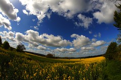 rapeseed fisheye (algo) Tags: uk blue sky white tree field clouds interestingness topf50 topv333 explore hedge algo 8mm fisheyelens samyang tringreservoirs 50f explore241 raoeseed littletring