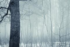 Mystical Mist (Aspiriini) Tags: mist forest suomi finland mets littoinen sumu jonilehto aspiriini