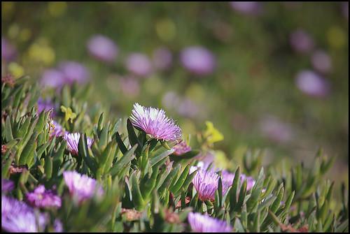 400mm Flowers.