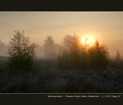 Naturfaszination ... Wisseler Dnen, Kalkar, Niederrhein (nigel_xf) Tags: mist nature misty fog sunrise nikon nebel dunes natur foggy nigel sonnenaufgang dnen niederrhein d300 wissel kleve morgennebel kalkar bodennebel platinumheartaward nikond300 binnendnen wisselerdnen nigelxf vsfototeam
