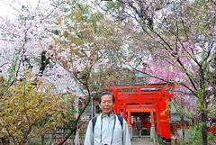 DSC_0119 (yhshangkuan) Tags: japan spring kyoto blossom bloom  cherryblossom sakura   fullbloom 2011 hiranoshrine