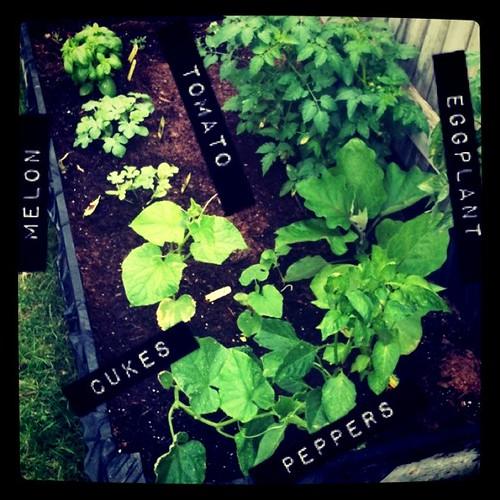 Go Little Garden Go!!!