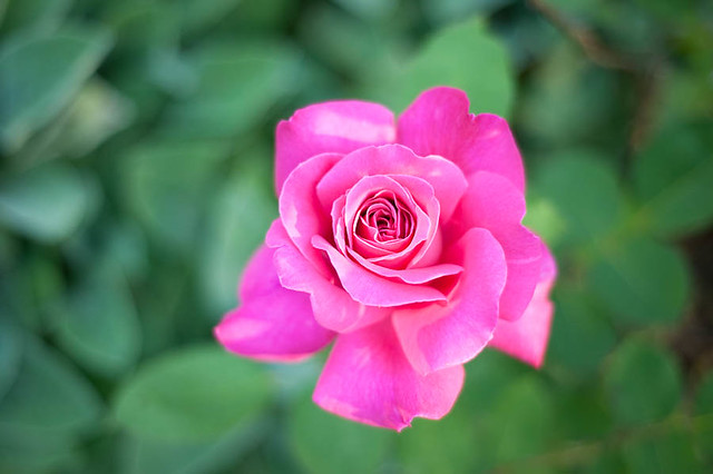 FlowerGarden2011-3