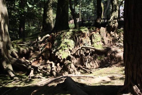 苔と切り株と影