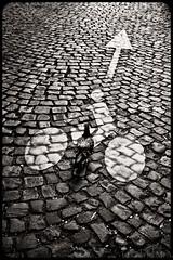 ... (Gabriel M.A.) Tags: road street bw sepia lumix pigeon stickman cobblestone cropped arrow 20mm toned f28 2x3 4x6 f17 gf1 7earrondissement panasoniclumix20mmf17asphpancake