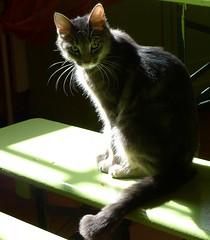 Surprise (p.franche Occupé - Buzzy) Tags: brussels bar cat chat belgium belgique bruxelles surprise brussel belgïe lx3 pfranche