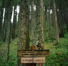 direction. (manyfires) Tags: trees signs green film sign oregon forest mediumformat landscape hiking hike hasselblad direction pacificnorthwest arrow multnomah columbiarivergorge wahkeena larchmountain hasselblad500cm
