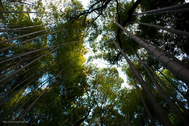 Kyoto - Bosque de bambú de Sagano (Arashiyama)