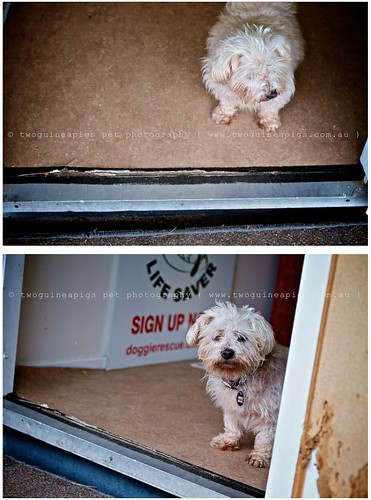 Resident of Monika's Dog Rescue by twoguineapigs Pet Photography part of Mozart series