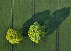 Bird's Eye View - Landscape Photographer of the Year 2013  - *** Commended *** (Chris Beesley) Tags: trees green sunrise flying flight fields balloontrip commended takeaview lpoty landscapephotographeroftheyear2013