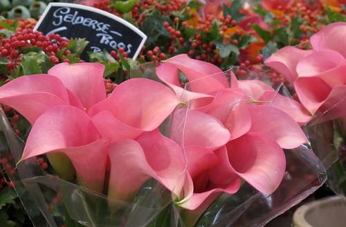 Flowers (Netherlands)