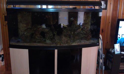 180 Gallon Oceanic Bow Front Complete Setup Carolina