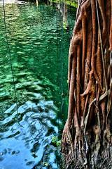 cenote x canche 6435 hdr (Emilio Segura Lpez) Tags: mxico yucatn cenote rbol aguada raz ekbalam