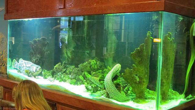 J's aquarium