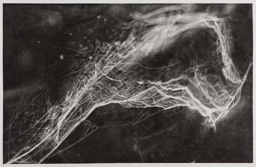 Cindy Wright, Broken web, 2009