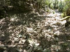 Dans la traversée Cristinacce-Marignana : le sentier labouré par les porcs locaux
