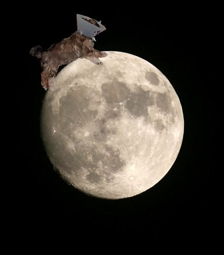 Scout on the Moon