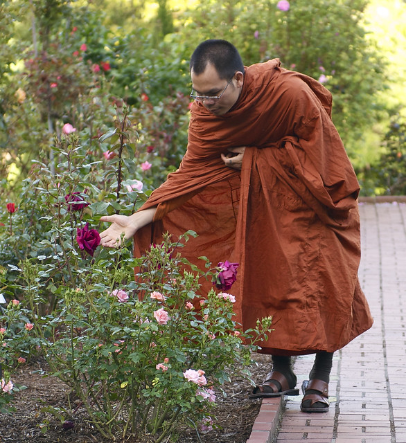 The Monk and the Rose