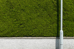 Hedged (archibaldo) Tags: shadow green lamp post minimal hedge