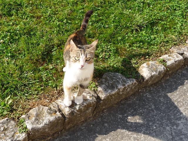 Cat in Trogir