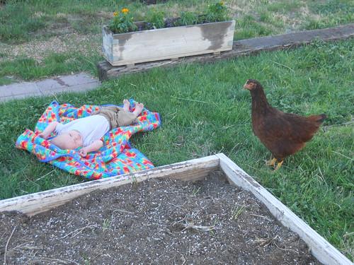 Nels&Chicken