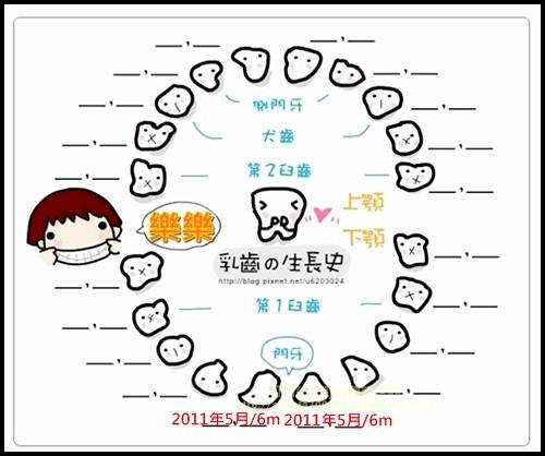 乳牙發牙圖加上發牙日期