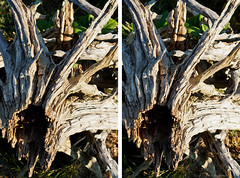 Driftwood in 3D (Greg Booher) Tags: light shadow summer usa canon bristol eos rebel evening stereogram stereophotography 3d tennessee driftwood sullivan depth efs xsi easttennessee 450d 55250 northeasttennessee gregbooher crosseyeviewing