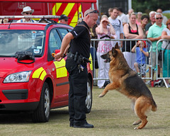 Look you've trained me to take people down. Just give me the bloody toy or else! 999 Emergency Services Display Eastbourne 2011 (Daves Portfolio) Tags: tourism display police demonstration criminal event crime eastbourne bite emergency services attraction attacking alsation 999 policedog crimefighting 2011