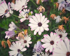 5 (Jon-F, themachine) Tags: jonfu 2016 olympus omd em5markii em5ii em5mkii em5mk2 em5mark2  mirrorless mirrorlesscamera microfourthirds micro43 m43 mft ft     snapseed japan  nihon nippon   japn  japo xapn asia  asian fareast orient oriental aichi   chubu chuubu   nagoya  plants  flower flowers   plant flora