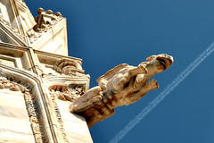 Doccione del Duomo (Rossella De Amici) Tags: milan cathedral milano gothic duomo gargouille gotico doccione