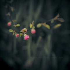Little Marvels of Spring (Fuji and I) Tags: flowers lensbaby spring blossoms idream selectbestexcellence sbfmasterpiece alexarnaoudov thesonyphotochallenge sbfgrandmaster