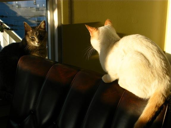 vancouver kitten sunset 001