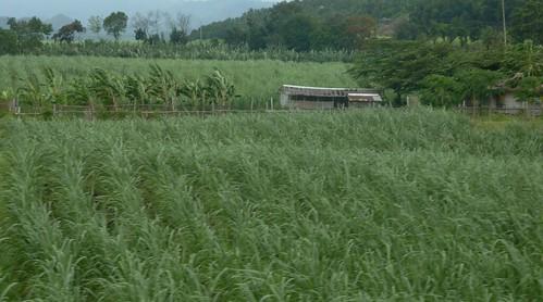 Negros -Bacolod-Savador-San Carlos (134)