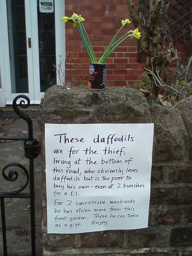 These daffodils are for the thief, living at the bottom of the road, who obviously loves daffodils but is too poor to buy his own - even at 2 bunches for a £1. For 2 successive weekends he has stolen some from this front garden. These he can take as a gift. Enjoy.
