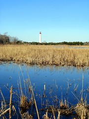 Cape May (monicaflick) Tags: march capemay muskrat lighthousearea freshwatermarshes