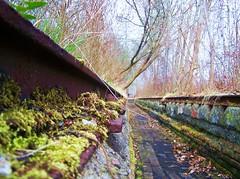(kaktus83) Tags: abandoned schöneberg natur grün rost baum moos stahl südgelände