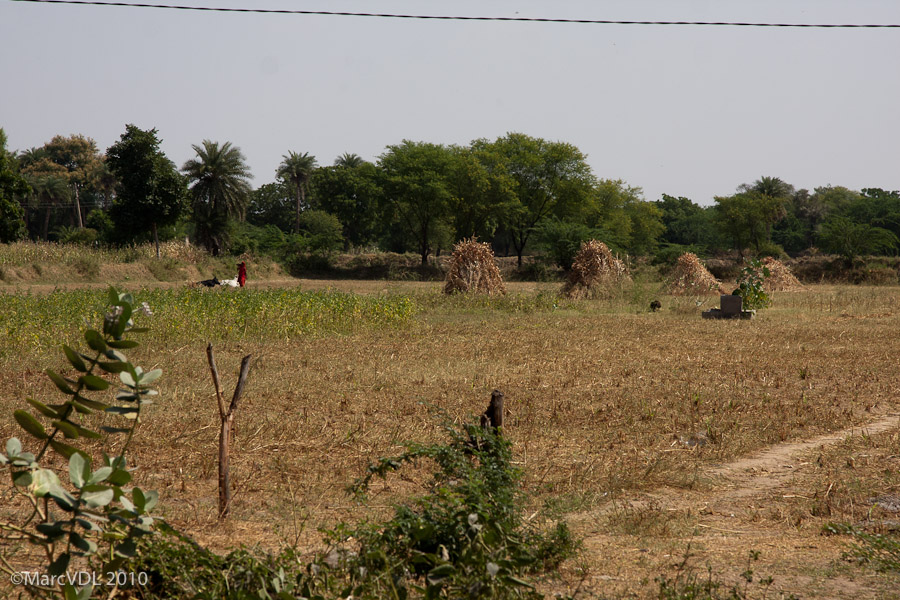 Rajasthan 2010 - Voyage au pays des Maharadjas - 2ème Partie 5598959522_2a93a91319_o