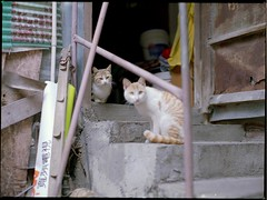 stair (Egg Cheung) Tags: cat 80mmf19 mamiyam6451000s fujicolorrealaace