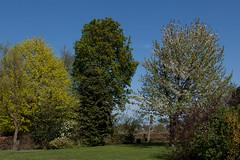 Lente (Artelanoi) Tags: holland dutch canon garden landscape spring blossom nederland thenetherlands tuin lente bloesem landschap noordbrabant oirschot 50d