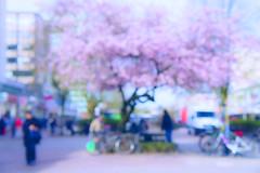 Frühling in Altona (Paul mit dem Pinscher) Tags: pink abstract germany deutschland spring fuzzy sony hamburg blossoms blurred cherryblossom unscharf altona abstrakt fruehling bluete nex kirschbluete neuegrossebergstrasse hamburgaltona japanischekirsche