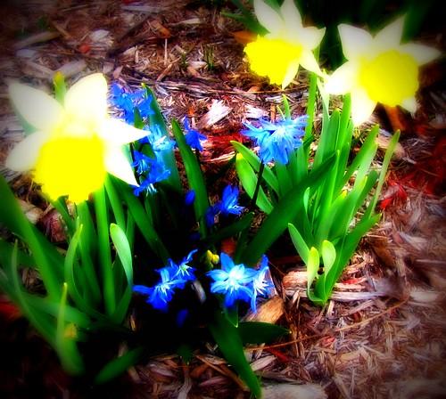 Nuclear Daffodils