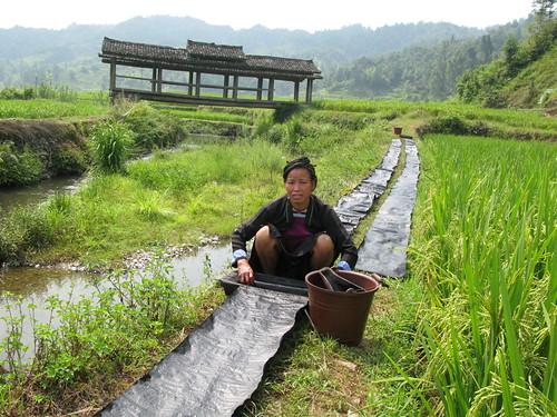Dyeing Indigo Cloth in a Rice Paddy, Xindi