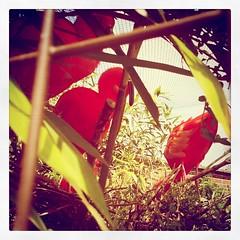 I see you birdies!