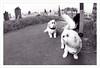 Swishy Tail (Fairy_Nuff (new website - piczology.com!)) Tags: dogs church st tail cemetary great orme swishy tudnos tudno wfcgreatorme2011