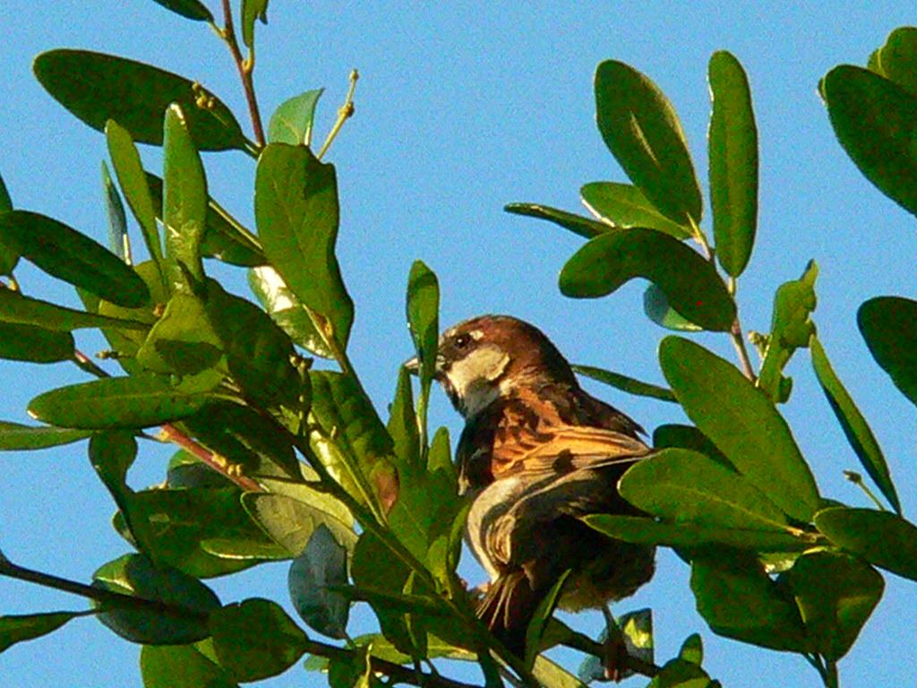 Bird: Tertiary Consumer