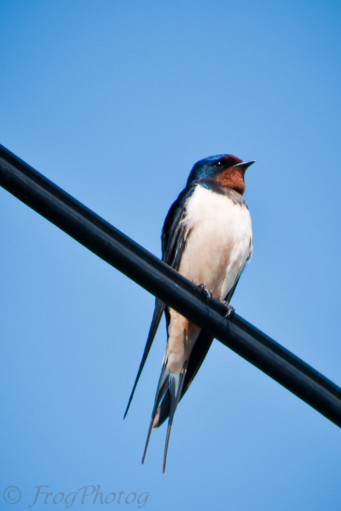 89/365 ~ Swallow #2