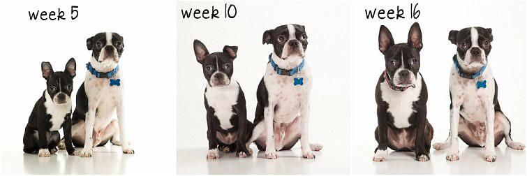 lola week 16