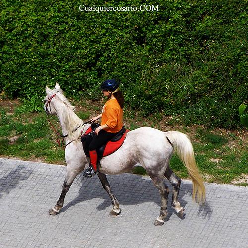 Equino vía